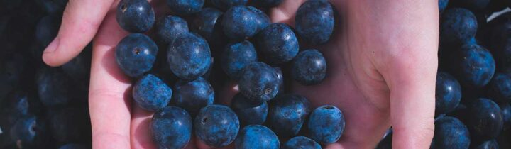 Blueberries: Sweet, Juicy, Healthy - Featured Image